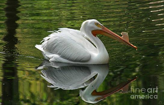 American White Pelican by Lynn Jackson