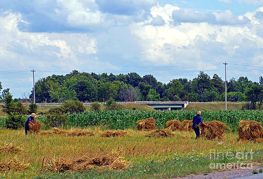 Linda Rae Cuthbertson - Amish Boys Work the Hay Field by Hand