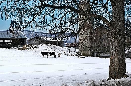 Amish Farm Scene by Stephanie Calhoun