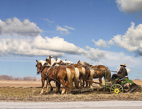 Terry Shoemaker - Amish farmer plowing
