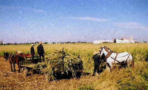 Amish Harvest by Boyd Miller