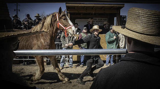 Amish horse auction. by Brian R Tolbert