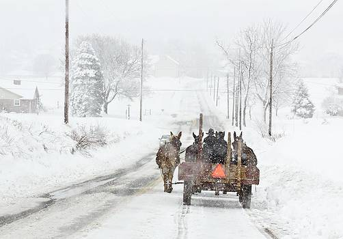 Amish Mule Wagon by Ginger Sanders