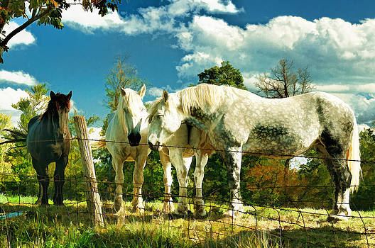 Amish work horses by Dick Wood