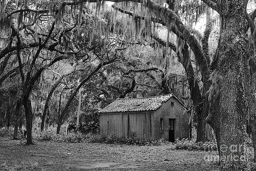 Amongst The Live Oaks by Andre Turner