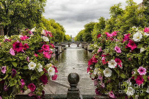 Amsterdam in Bloom by Barbara Youngleson