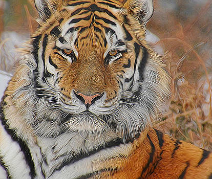 Amur Tiger Magnificence by Diane Alexander