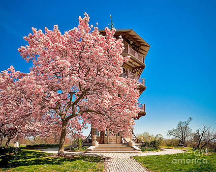 An Afternoon At Patterson Park by SCB Captures