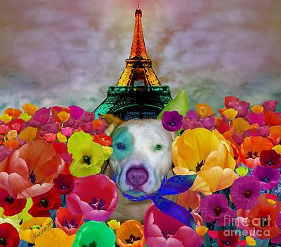 An American Pitbull In Paris by Mucha Kachidza