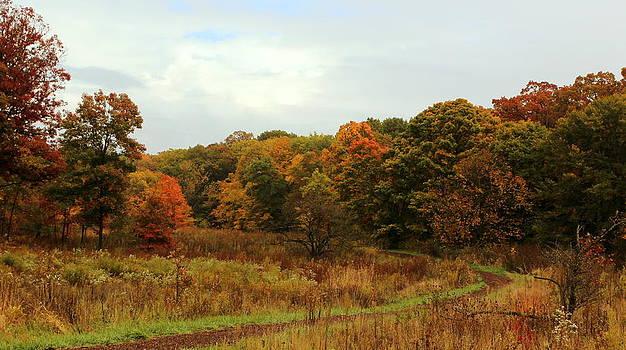 Rosanne Jordan - An Autumn Path
