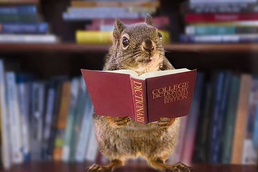 Peggy Collins - An Educated Squirrel