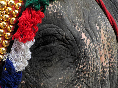 An Elephant at a temple with the adorning Nettipattam. by Joe Zachariah