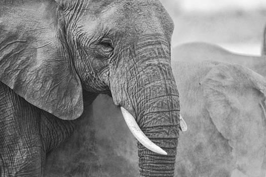 Paul W Sharpe Aka Wizard of Wonders - An elephant never forgets
