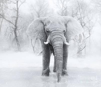 An Elephants first snow  by Lynn Jackson
