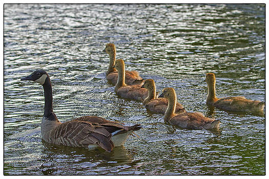 An Evening Swim by Linda Tiepelman