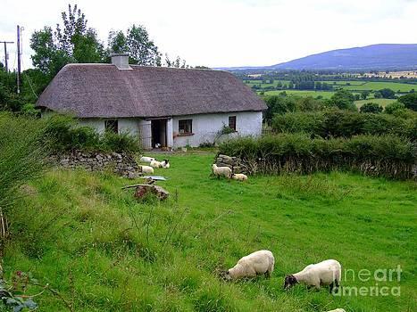 Joe Cashin - An old country home