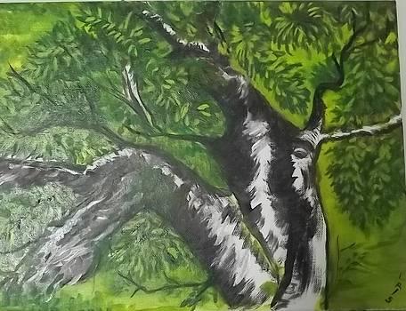 An Old Tree by Iris Devadason