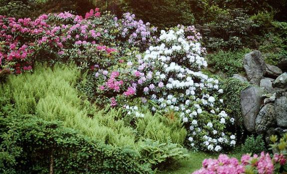 Stephen Proper Gredler - An Olmstead Garden