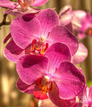 Ines Bolasini - An Orchid