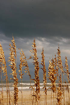 Sherlyn Morefield Gregg - An Outer Banks Autumn