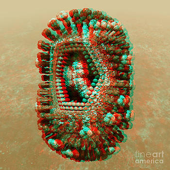 Anaglyph of Influenza virus cutaway showing internal structure 1 by Russell Kightley