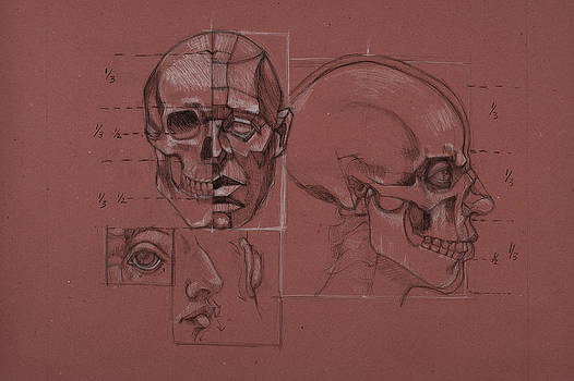 Anatomical Rendering by Katherine Moldauer