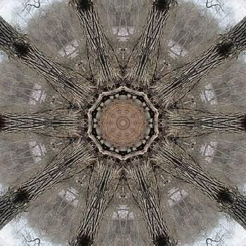 Ancient Cottonwood by Trina Stephenson