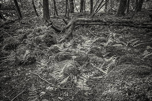 Ancient Grove by Alan Norsworthy
