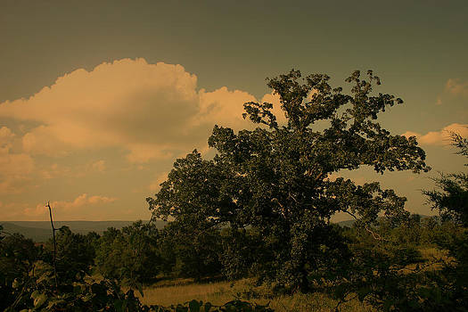 Ancient Oak in the Valley by Nina Fosdick