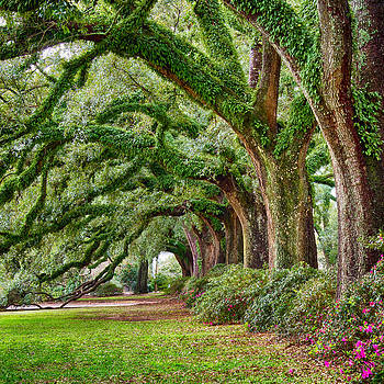 Ancient Oaks by Robert Hainer
