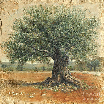 Ancient olive tree by Miki Karni