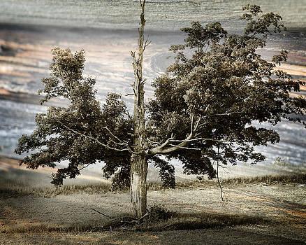 Scott Hovind - Ancient Tree