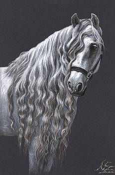 Andalusian Horse by Nicole Zeug