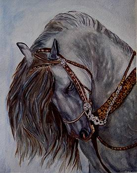 Andalusian by Joan Pye