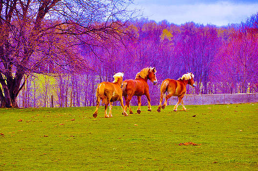 Andy's Horses by BandC  Photography