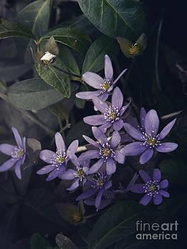 Anemones in the darkness by Monika Pachecka