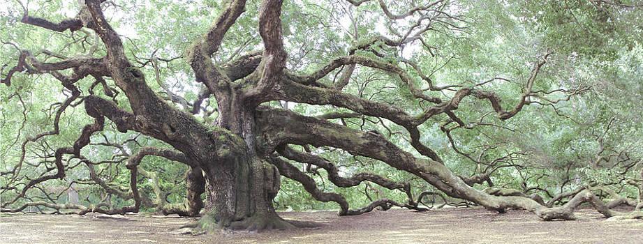 Angel Oak by Jessica Snyder