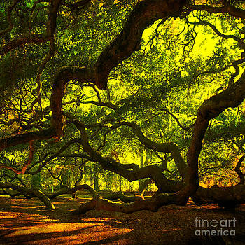 Susanne Van Hulst - Angel Oak Limbs Crop 40