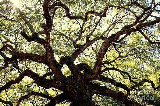 The Majestic Angel Oak Tree by Pete Dionne