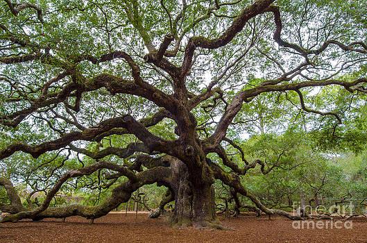 Dale Powell - Angel Oak Tree