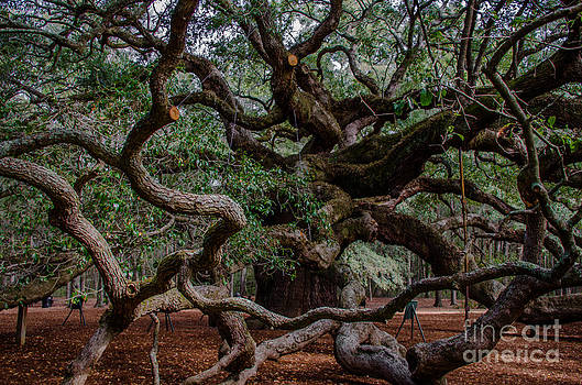 Dale Powell - Angel Oak Tree Treasure