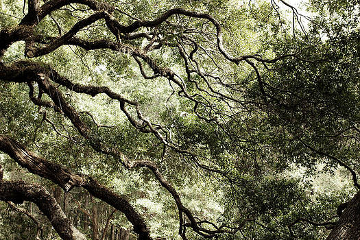 Angel Tree by Kim Thompson
