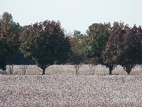 Angelic Cotton Fields by Kevin Croitz