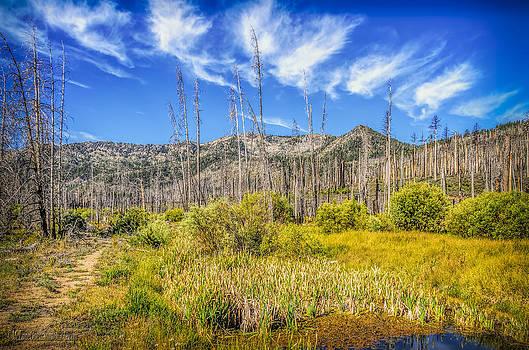 LeeAnn McLaneGoetz McLaneGoetzStudioLLCcom - Angora Creek Restoration