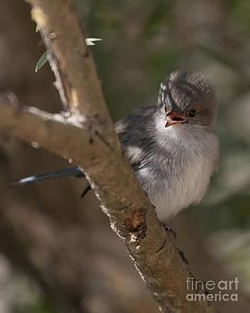Angry Bird by Serene Maisey