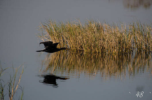 Anhinga Flyby by Brian Manley