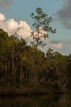 Paul Rebmann - Anhinga Pine