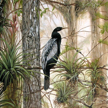 Anhinga Waiting by Tim Davis