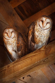 Mike Savad - Animal - Bird - A couple of barn owls