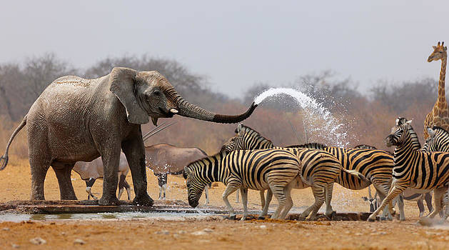 Animal humour by Johan Swanepoel
